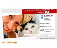 Jornada de Adopción Gatitos
