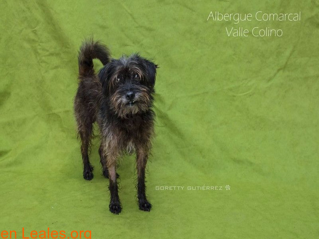 SPAY ADOPTADO ALBERGUE VALLE COLINO - 2/3