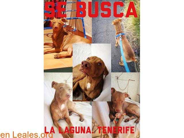 SE BUSCA - 1/1