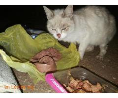 Poner comida gatos Mercadona Carrizal