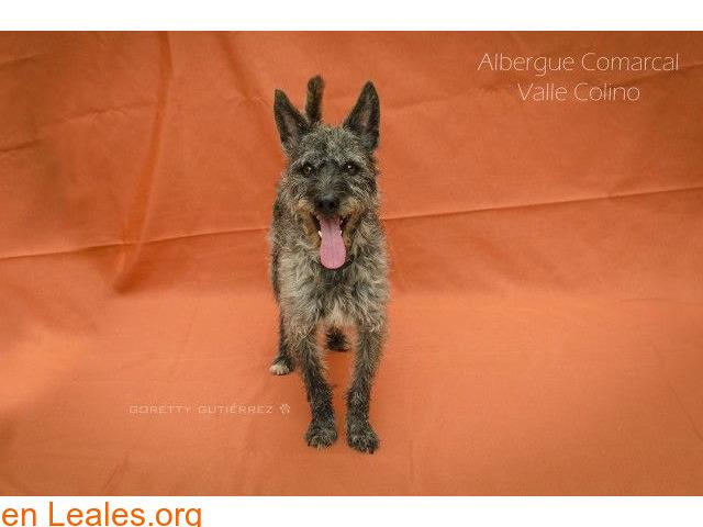 RAMSES ADOPTADO ALBERGUE VALLE COLINO - 2/3