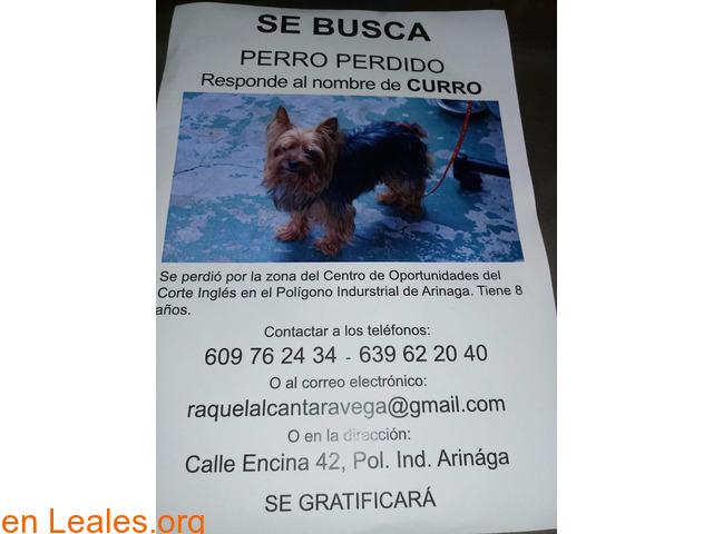 Curro se perdió - 1/1