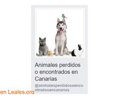 Animales Perdidos o Encontrados Canarias