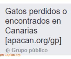 Gatos Perdidos o Encontrados en Canarias