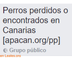 Perros perdidos o encontrados Canarias - Imagen 1/2