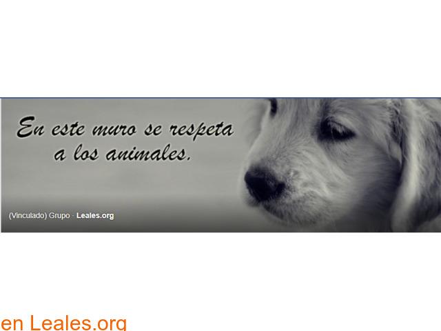 Perros perdidos o encontrados Canarias