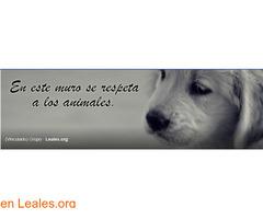 Perros perdidos o encontrados Canarias - Imagen 2/2