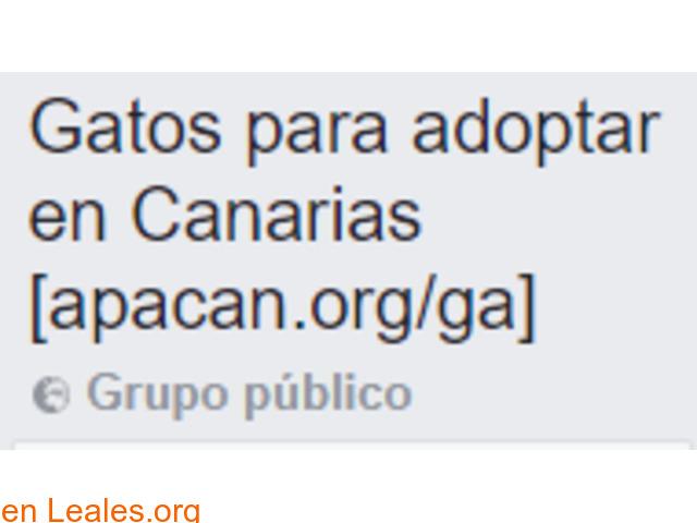Gatos para adoptar en Canarias