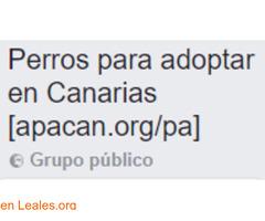 Perros para adoptar en Canarias
