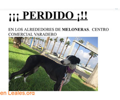 EN CASA - Imagen 2/4