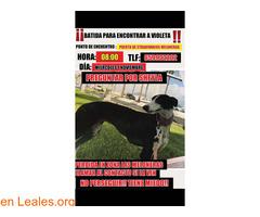 EN CASA - Imagen 4/4