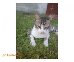 Gato perdido en Argerich