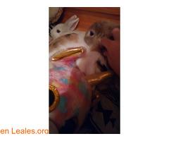 Se dan en adopción dos conejas. - Imagen 3/3