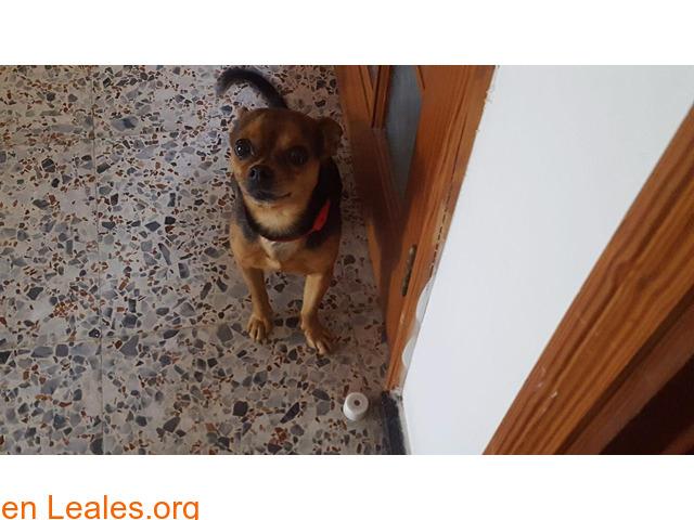 Perrito,ADOPTADO¡ - 1/1