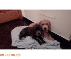 Cachorros, en adopción¡¡