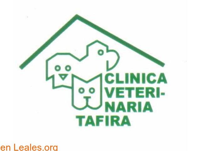 CLINICA VETERINARIA TAFIRA - 1/2