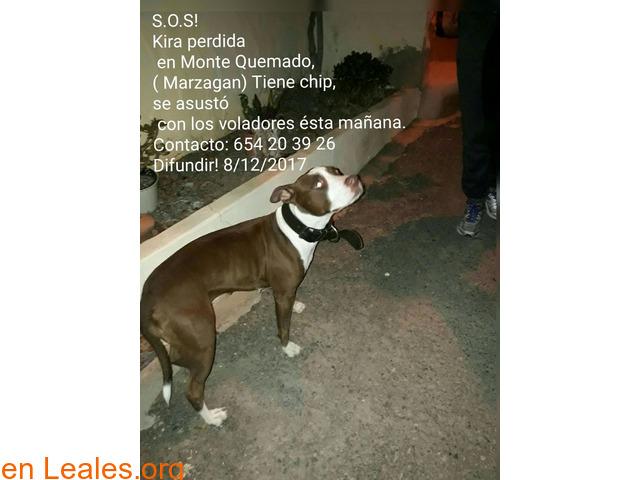 Kira, perdida en Marzagán (Gran Canaria) - 1/1
