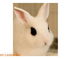 Conejo se ha quedado sin hogar