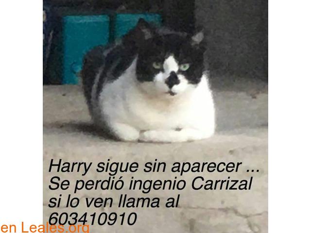 Harry - 1/1