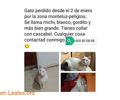 Gato perdido en Granada
