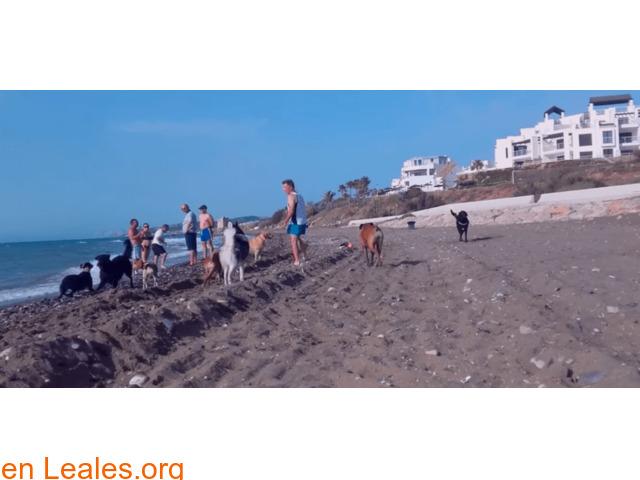 Playa de Piedra Paloma - Málaga - 2/4