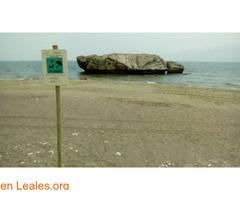 Playa de Piedra Paloma - Málaga - Imagen 3/4