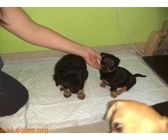 Perrita y dos cachorros GUIMAR - Imagen 3/3