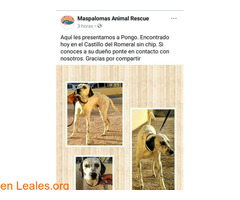 Pongo - Maspalomas Animal Rescue