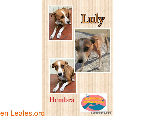 Luly - Maspalomas Animal Rescue - 1/1