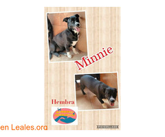 Mickey y Minnie Maspalomas Animal Rescue