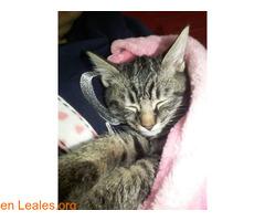 Gatito, Busca un hogar! ADOPTADO! - Imagen 2/2
