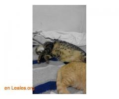 Mi gato Nuquito se perdió en Barcelona