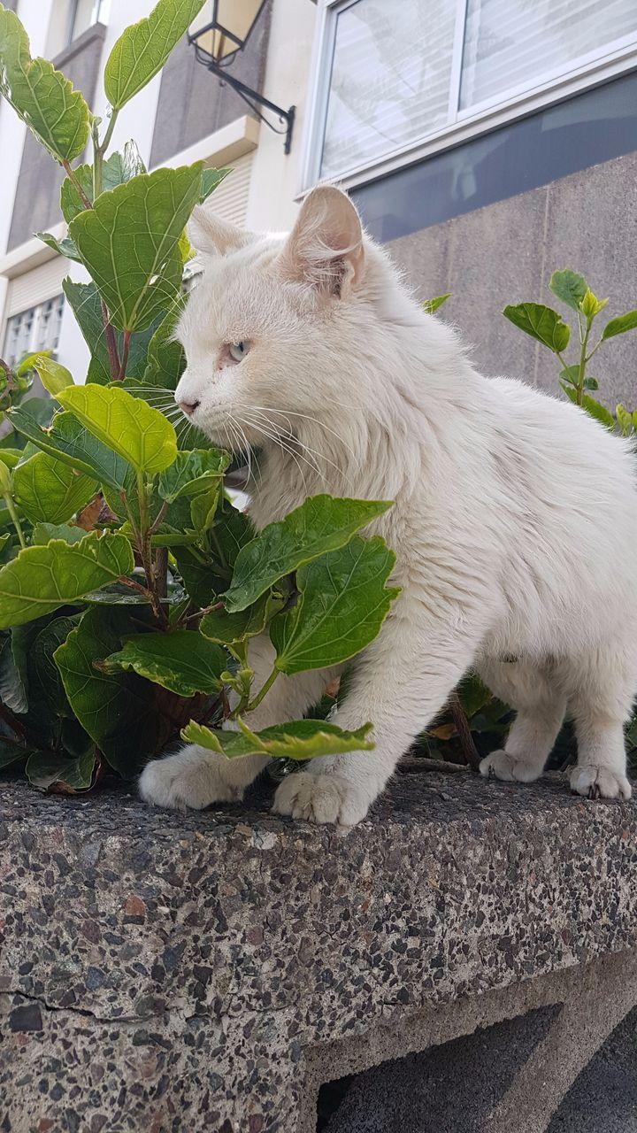 Leales.org » Gatos ya adoptados » Las Palmas - Gran Canaria ...