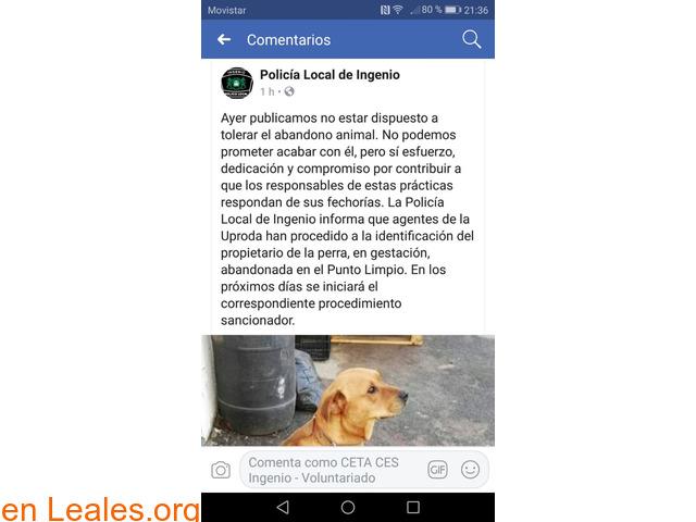 LOCALIZADO EL CULPABLE DE SU ABANDONO - 2/2