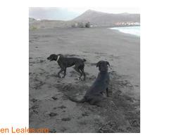 Black y Mia