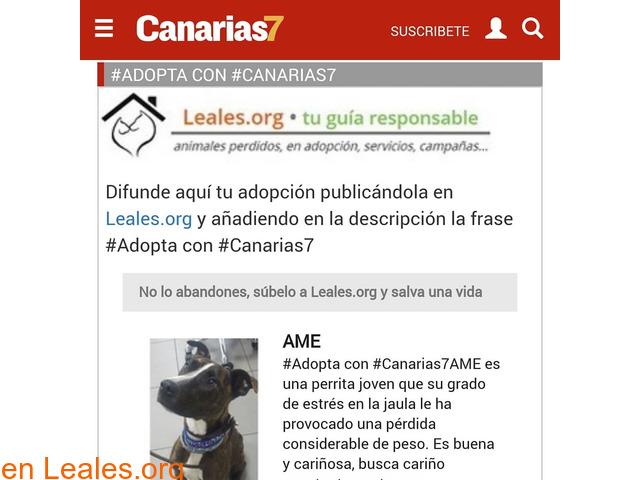 Publica tu adopción en Canarias7