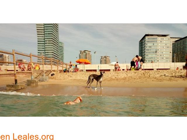 Playa De Llevant - Barcelona