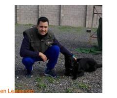 Adiestrador canino Las Palmas
