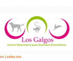 Peluquería canina Los Galgos