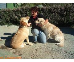 Guardería canina Braco's