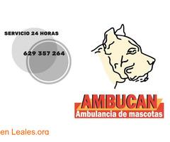 Ambucan ambulancia de mascotas