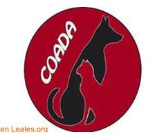 Coada colectivo de abogados animales