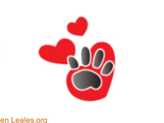 Lidia Voluntaria animalista