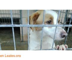 Pautas voluntarios: perreras y albergues