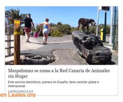 Maspalomas en Red de Animales sin hogar