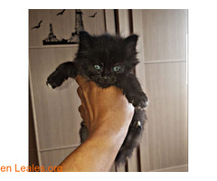 Adoptado!!