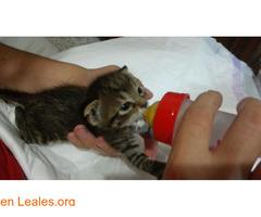 Guía de cuidados para gatitos huérfanos