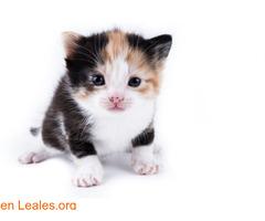Guía de cuidados para gatitos huérfanos - Imagen 3