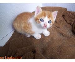Guía de cuidados para gatitos huérfanos - Imagen 5