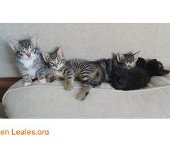 Guía de cuidados para gatitos huérfanos - Imagen 6